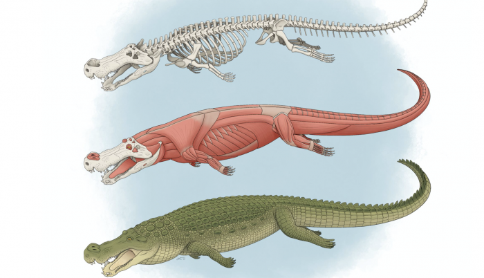 deinosuchus-ilustracion