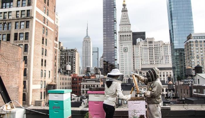 apicultura-andrews-honey-abejas-nueva-york-negocio