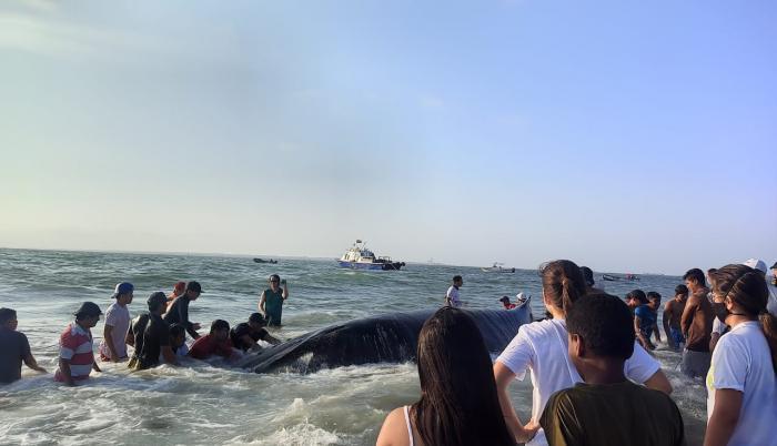 Comuneros lograron que el animal se retire de la playa de la isla.