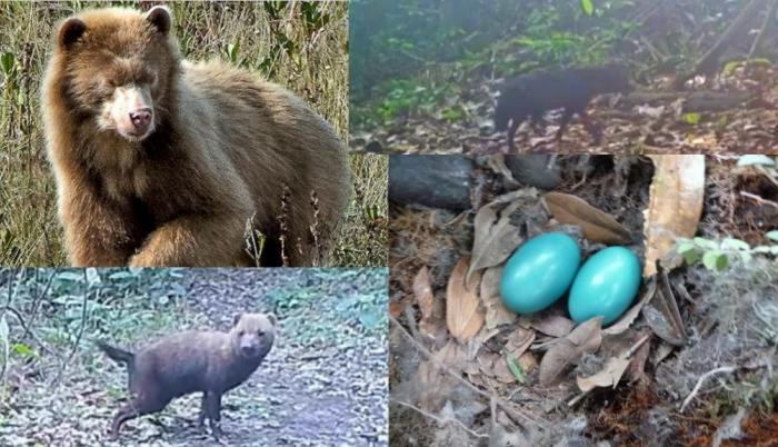 animales-salvajes-raros-video-foto-selva
