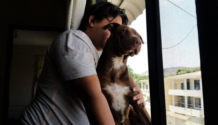 Ordenanza regula la tenencia de mascotas y previene el maltrato.