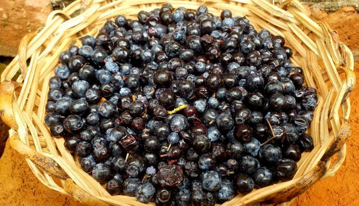 El mortiño, fruta parar preparar platos dulces y salados