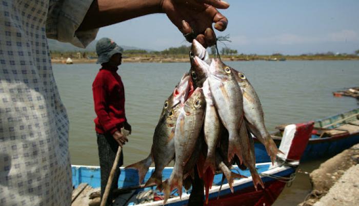 Pescado-afectado-china