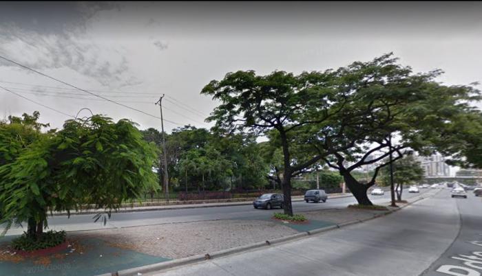 Este es el sector de donde será retirado el árbol.