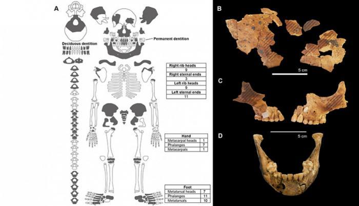 arqueologia-entierros-ninos-estudios