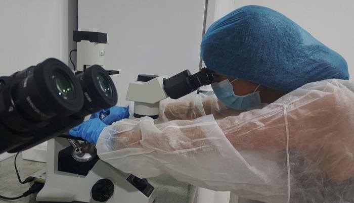USFQ_Daragon BioMed_Proyecto de Biomedicina