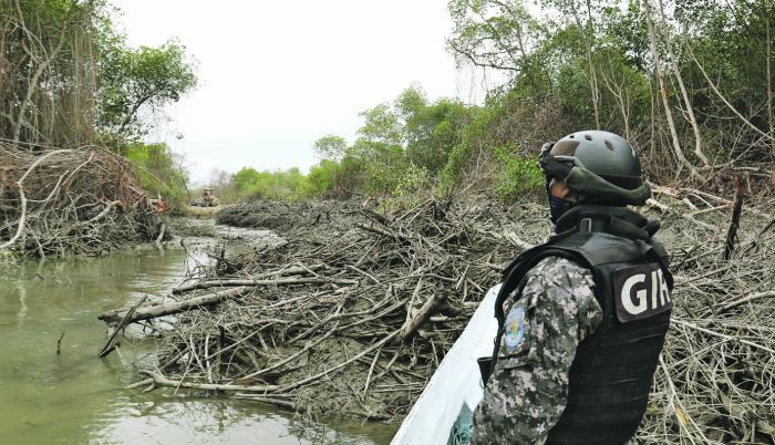 Hecho. Un agente del GIR observa una tala de manglar en el golfo.