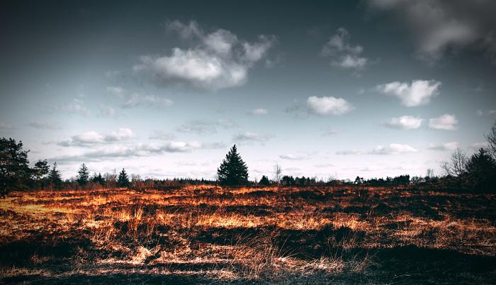 Sequia e incendio forestal