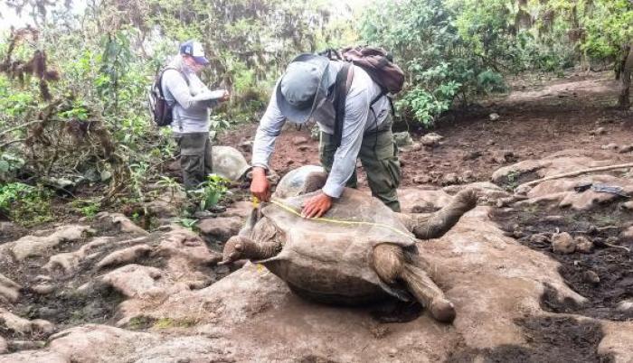 Personal técnico realizó una medición de las especies, para monitorear su desarrollo