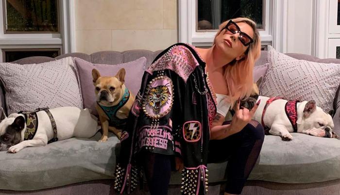 Lady Gaga y sus perros