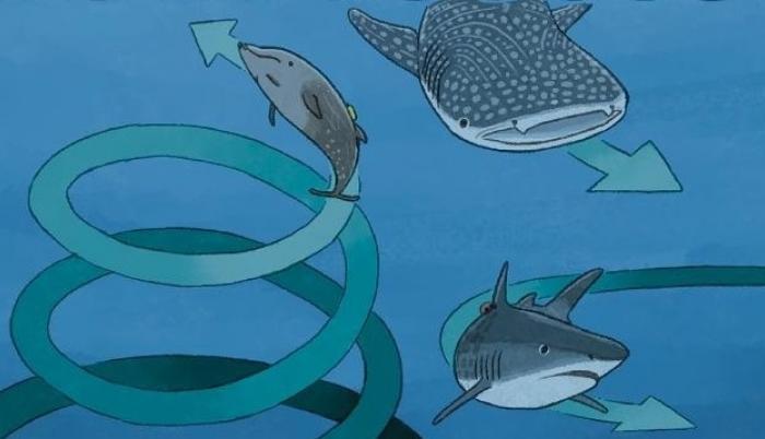 Esta imagen muestra el comportamiento en círculos de varios animales marinos.