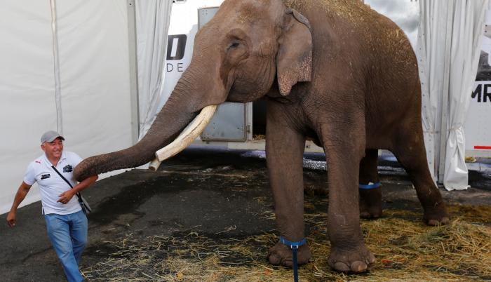 Un elefante asiático de circo, es trasladado hoy, martes al Zoológico de Culiacán desde la ciudad de Guadalajara, estado de Jalisco (México).