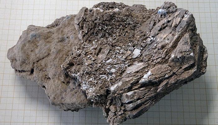 Marfil de mamut encontrado en el nivel de excavación del auriñaciense (33.000-30.000 años) en el yacimiento de la cueva francesa de Isturitz.